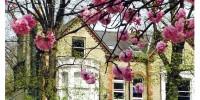 Caption. Cambridge in spring