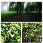 Cambridge flowers